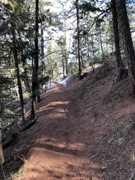 Heading uphill from the parking lot. One of the best maintained trails from fallen trees I have come across.