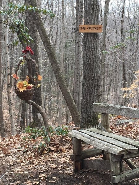 Bench on the Cricket Overlook