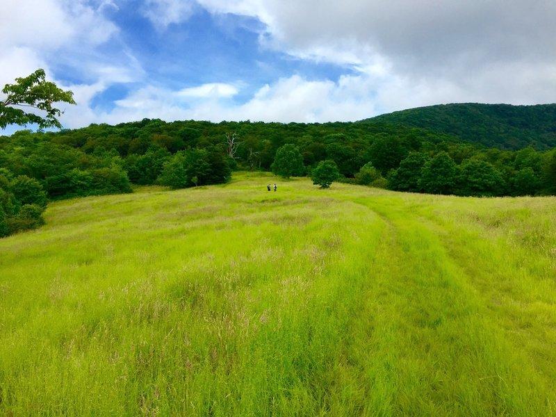 Whigg Meadow - so awsome.