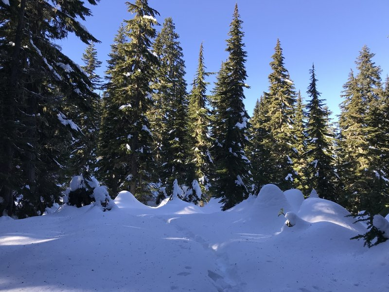 Snowy wonderland on ridge line.