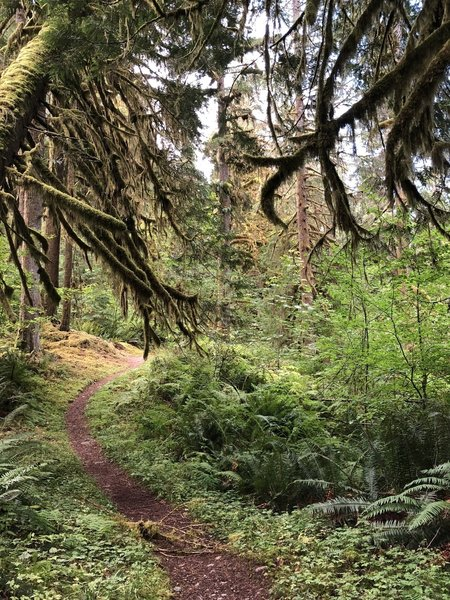 The first 4 miles of trail, a relatively easy walk from South to North, is covered by beautiful old growth forest.