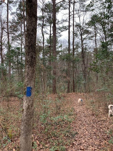 Trillium Trail- Plenty of room for a couple to hike or to bring along dogs