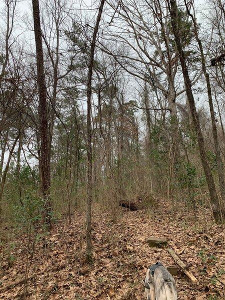 Small Incline area along Trillium Trail