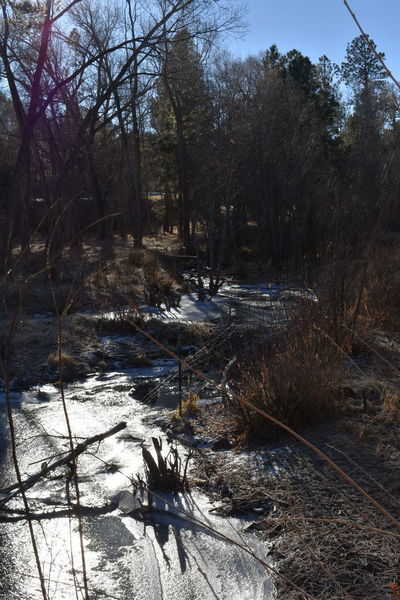 South Fork of the Little Colorado River