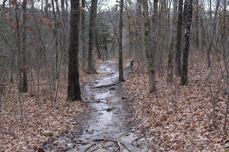 The trail is a narrow, dirt singletrack that descends through the woods.  On rainy days, water may flood the trail.