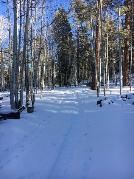 Winter at Poll Knoll