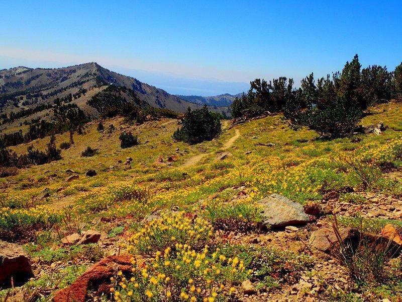 Houghton trail looking toward Relay Peak