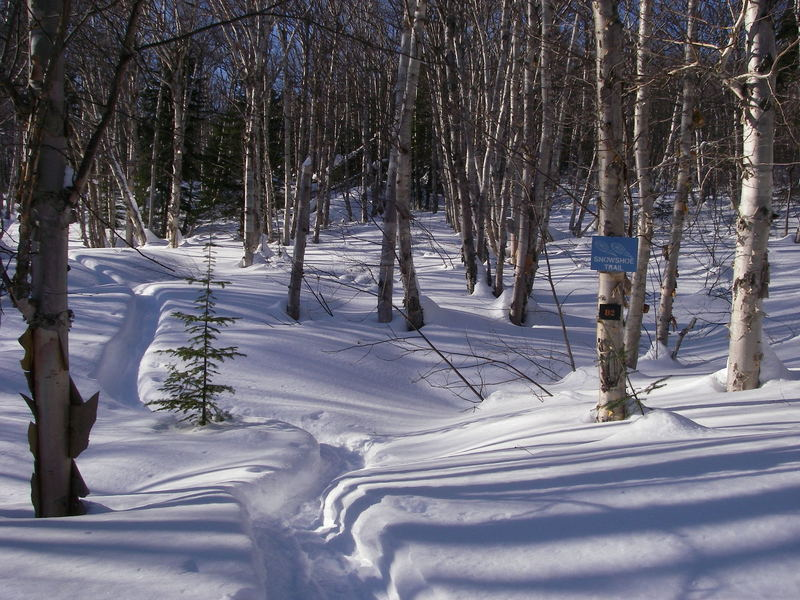 Beautiful birch grove on Snowshoe trail D2 off Games Trail.