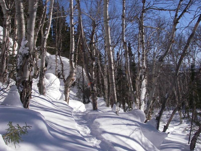 Snowshoe Trail D6 near D7 intersection.