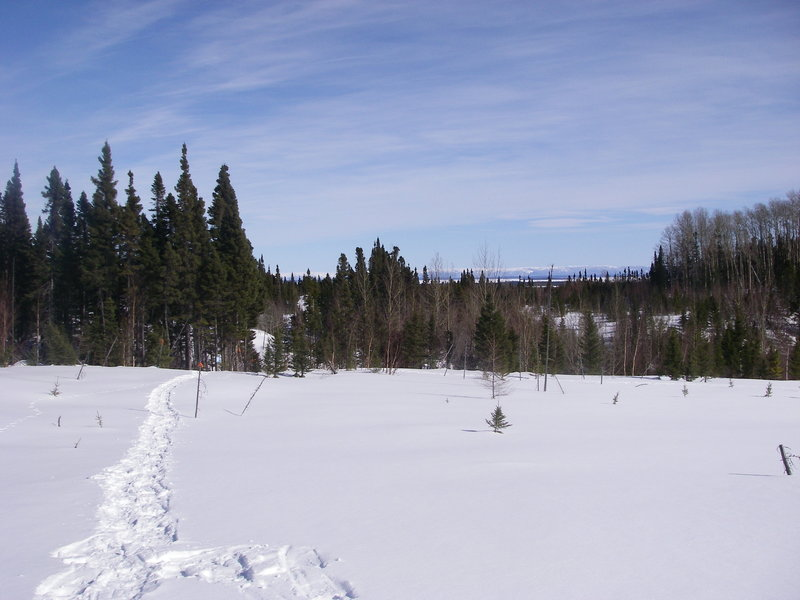 Intersection of Snowshoe trails E3 and E2 with Aspen Lookout to the right.