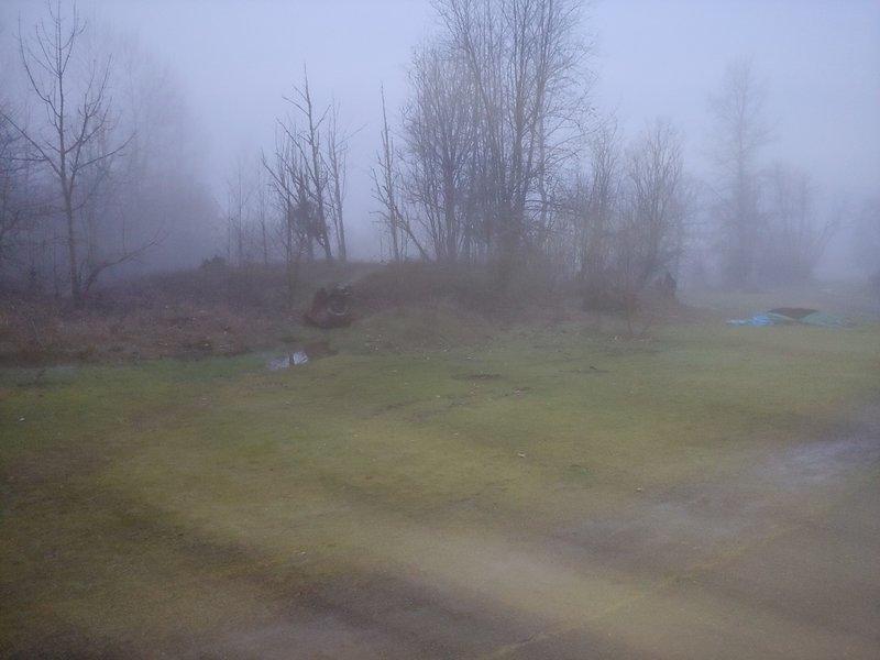 Foggy nature.
