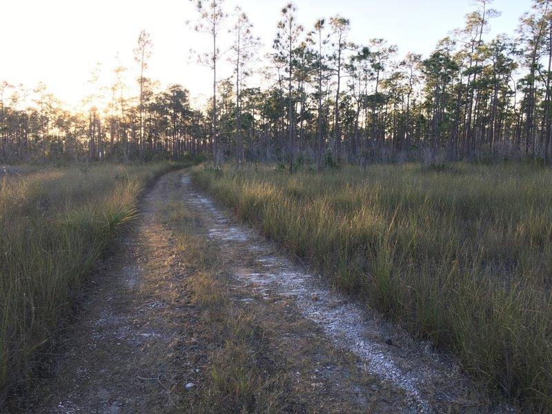 Long Pine Key Trail