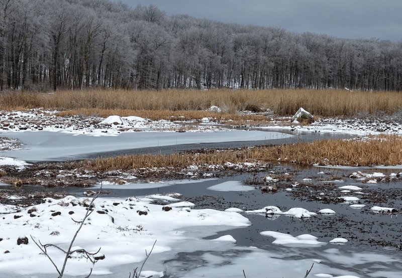 An otherwise routine wetland becomes a winter wonder after a snow and ice storm in Mahlon Dickerson Reservation, NJ.