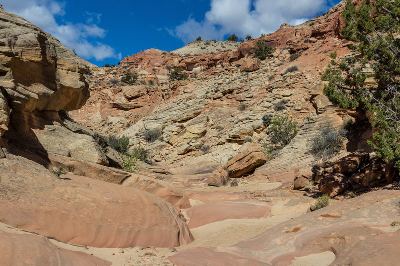 Burro Wash starts out fairly wide with a sandy and rocky surface.