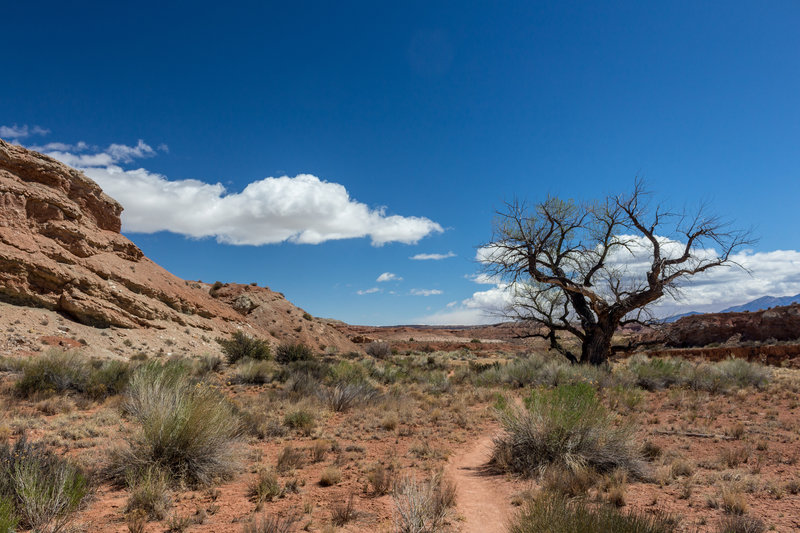 The first mile of the Burro Wash Route is through very open desert territory.