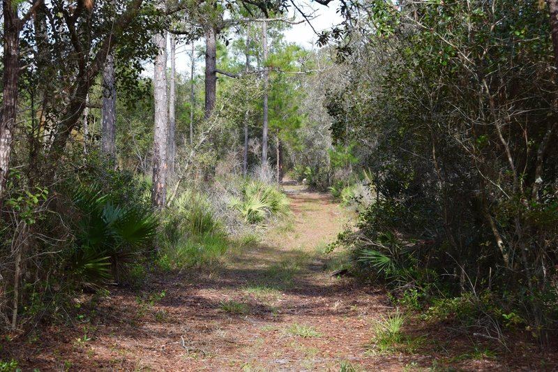 Typical trail in the Seminole State Forest.