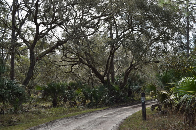 Trail with the Seminole State Forest.