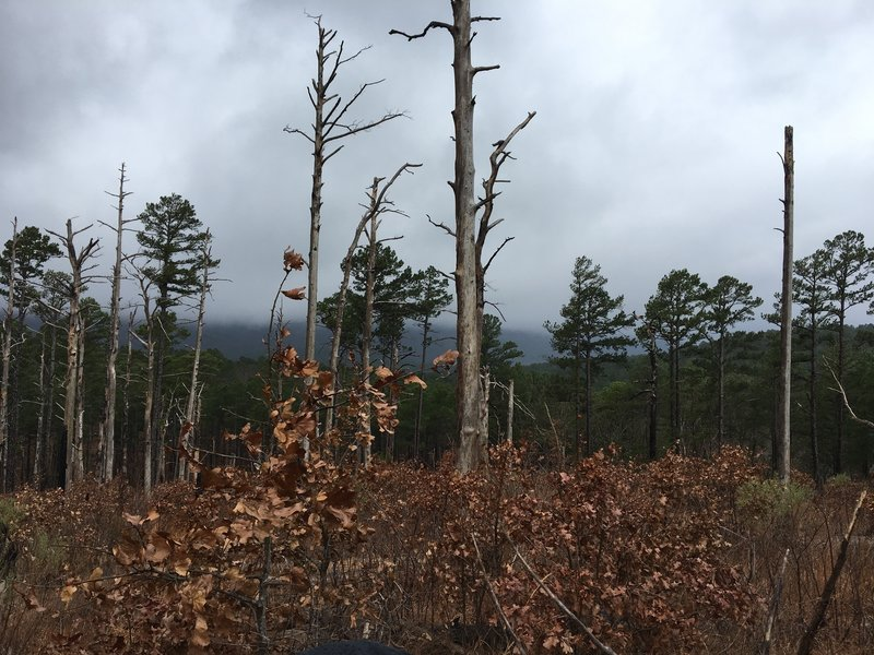 Huge die off just SW of Snake Mountain lots of downed trees and widow makers through this area