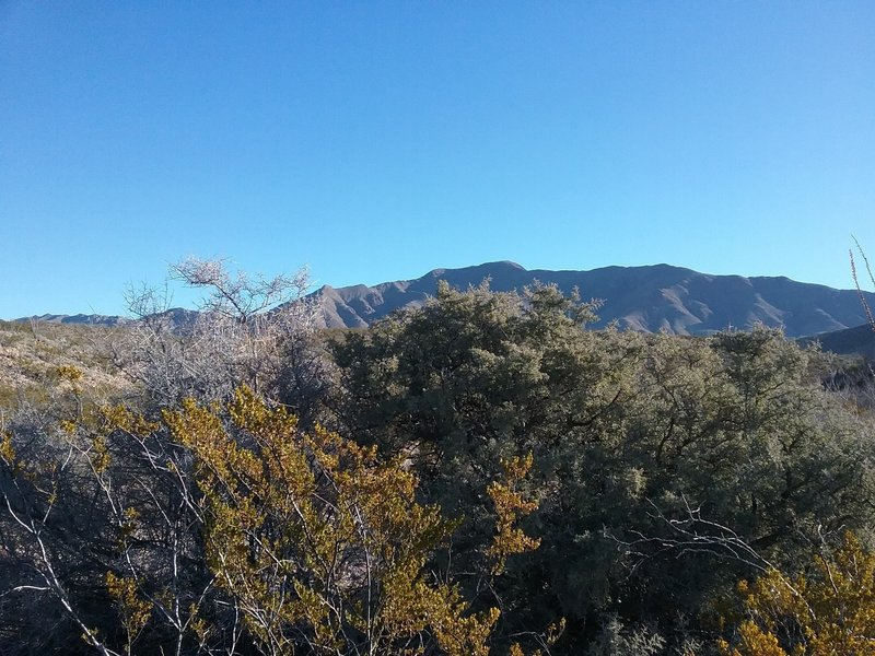 View of the Franklin Mountains in the winter