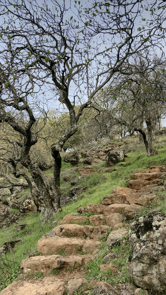 Stone stairs on hillside