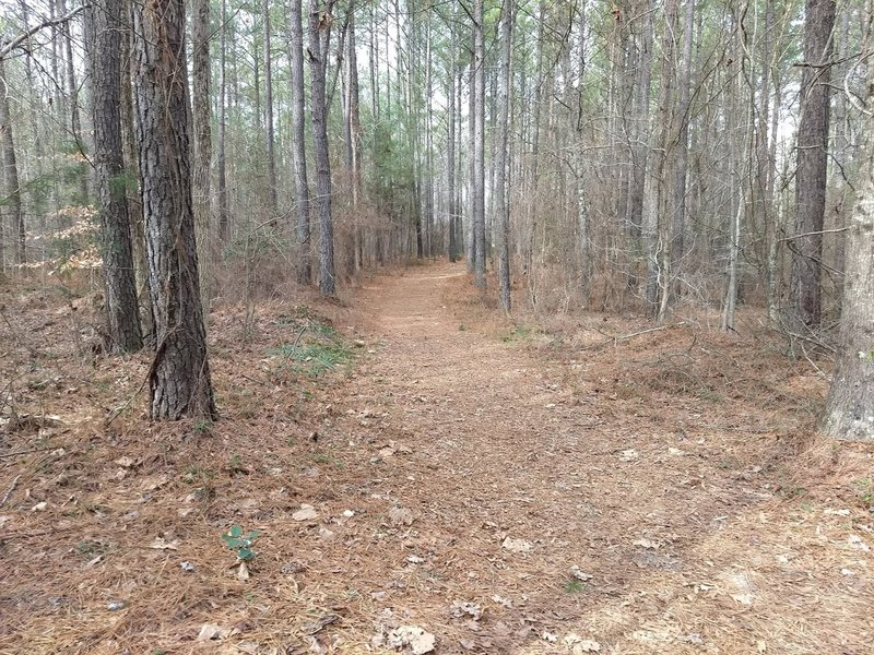 Forest Exploration Trail