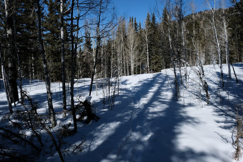 Snow shoeing up the Cross Creek Trail.
