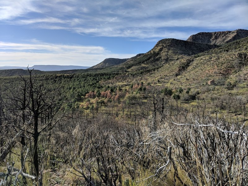 Result of the 2017 Highline fire. You can see the burned area to the right and unburned area to the left. The trail was widened to make a fire break in this area, so you often walk right down the border of the burned and unburned areas.