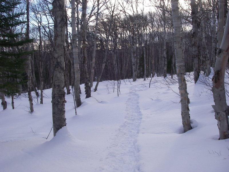 Snowshoe trail D5.