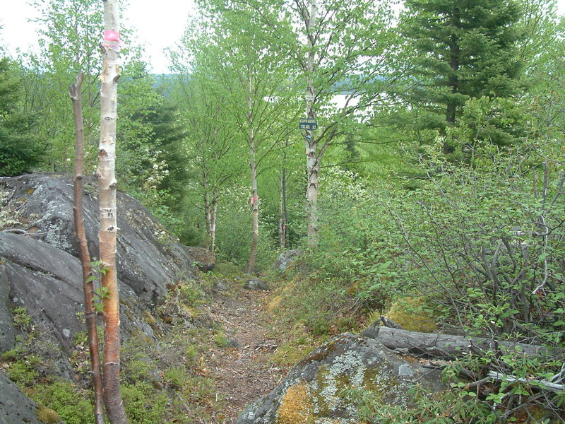 Snowshoe trail A2 is also a nice summer hike.