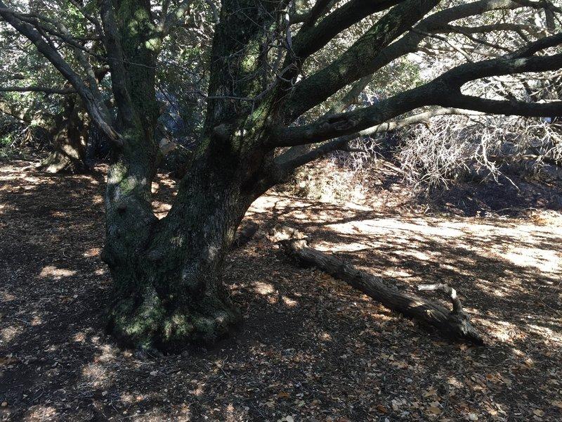 Live Oak Spring campsite
