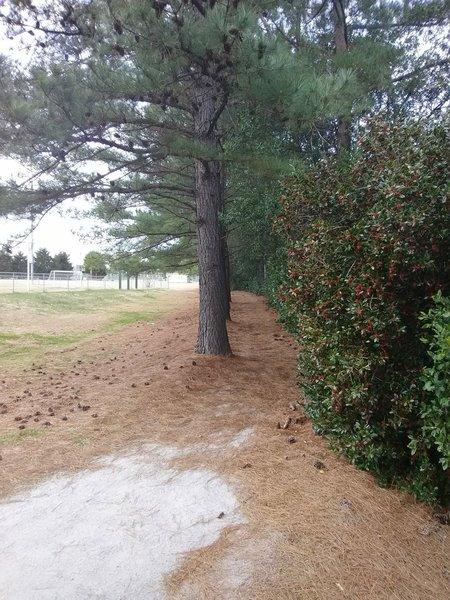Pine trail