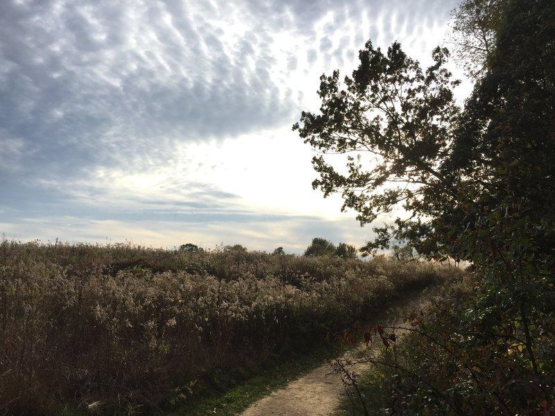 Trail near Cherry Tree Woods