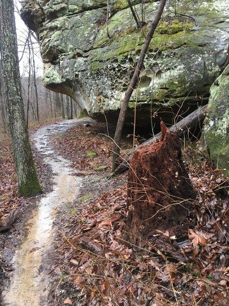 Bluff line along back loop of trail.