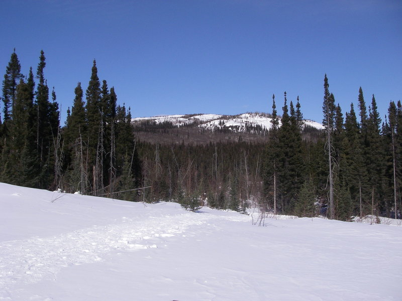The knoll with snowshoe trails D6 and E3 as seen from the chalet