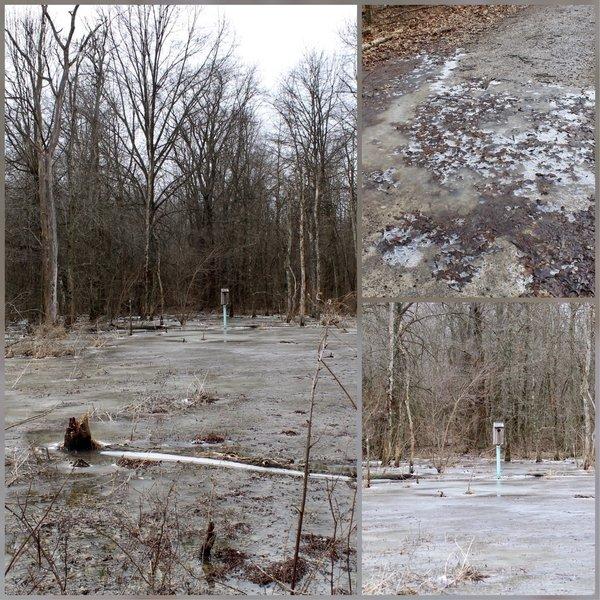 Frozen Wet Lands