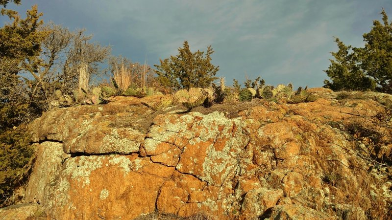 Juniper, prickly pear cacti, and rocks are everywhere along Elk Mountain Trail