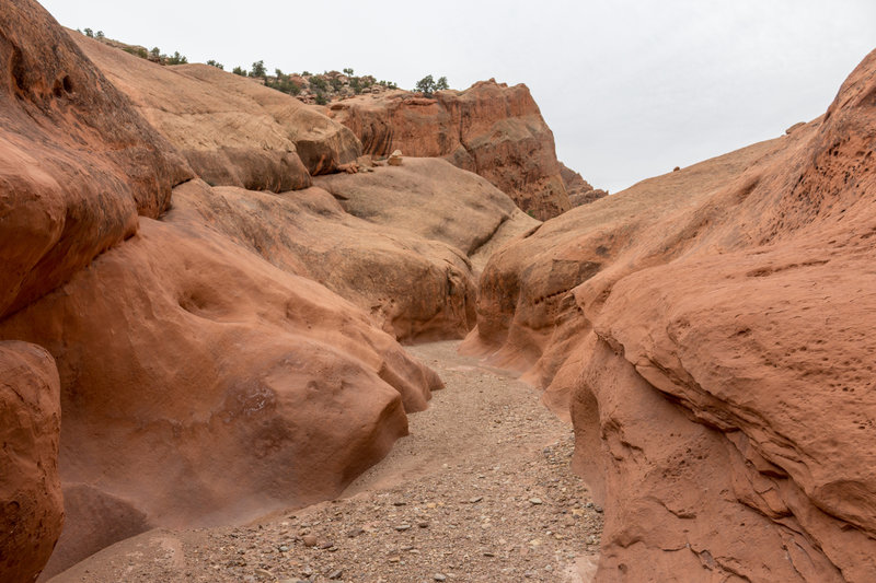 Lower Muley Twist Canyon leads through red Kayenta Sandstone
