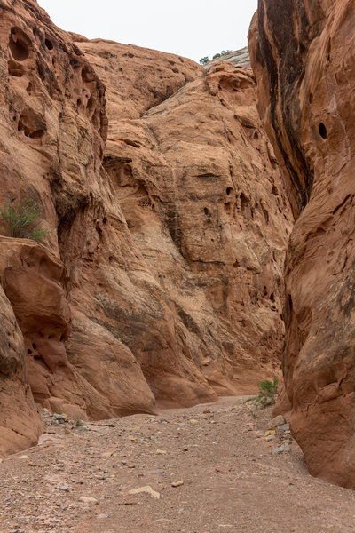 One of the narrower sections in Lower Muley Twist Canyon.
