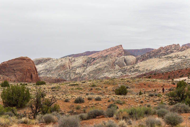 Angled Waterpocket Fold from Halls Creek Drainage.