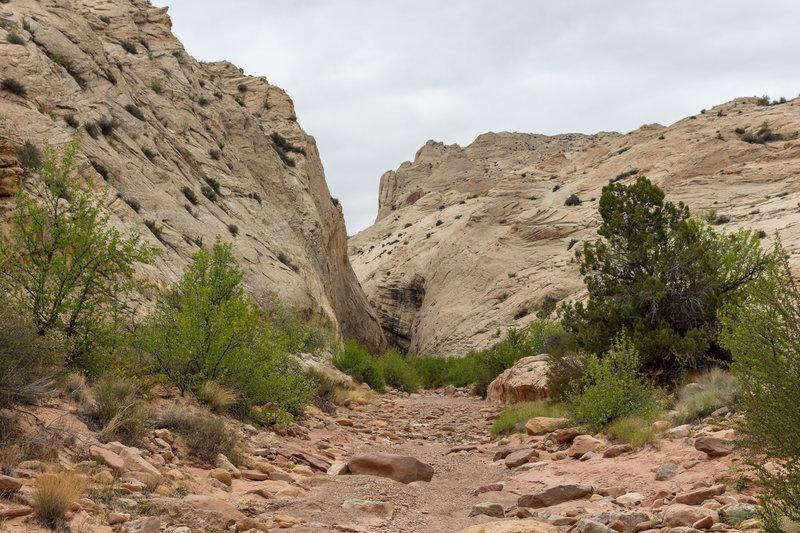 Mouth of Lower Muley Twist Canyon.