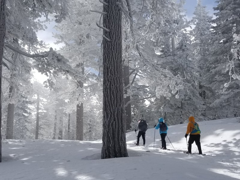Snowshoeing to Mt. Pinos - February 16, 2018.