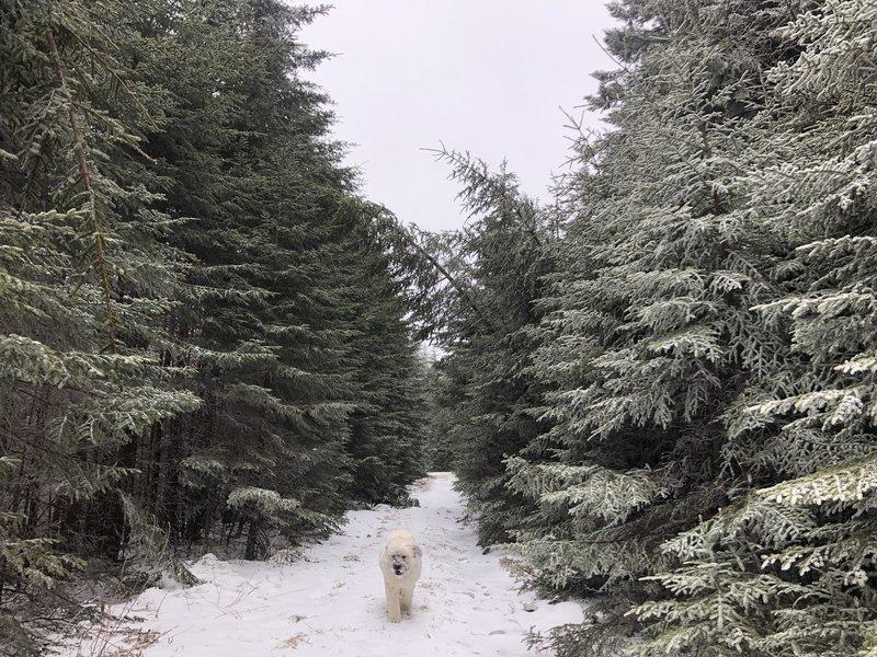 Dog friendly trail.