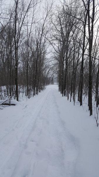 Snowshoe and Ski Trail through trees.