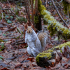 The forest floor is free of snow and the squirrels are going about their daily business.
