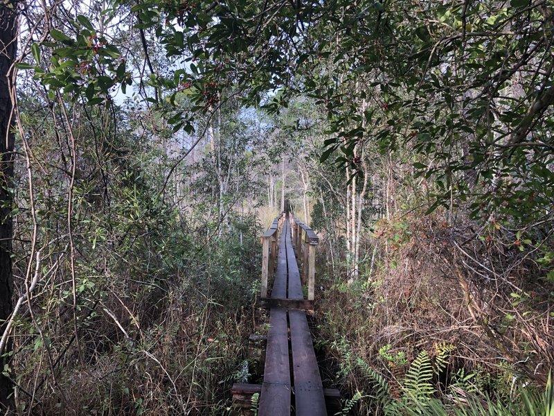 The Wiley Walkway