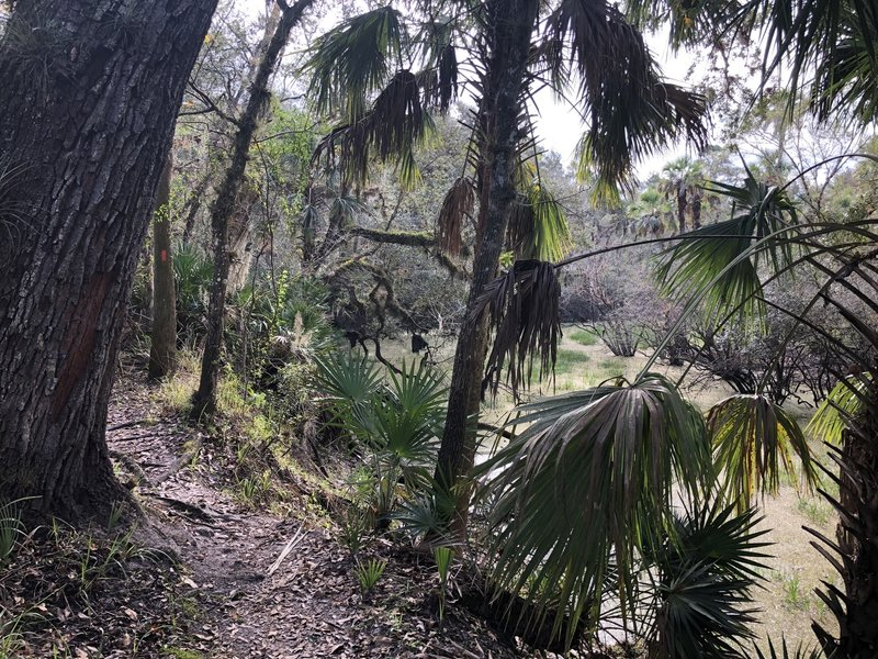 Typical trail close to a swampy depression