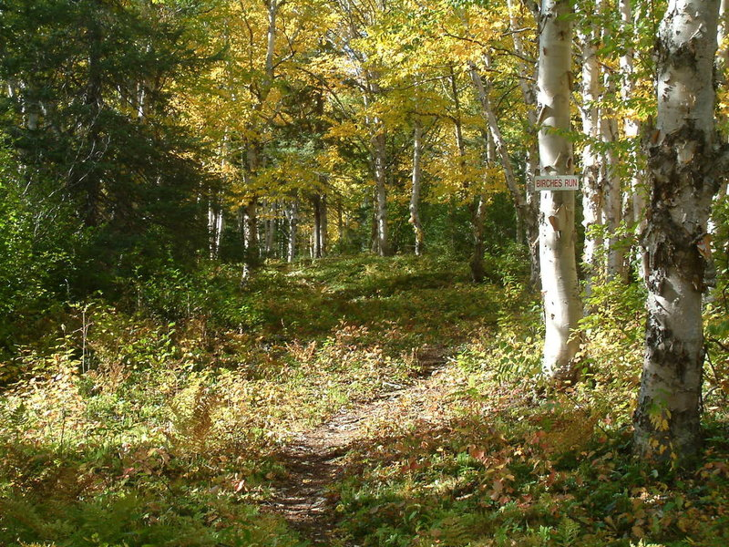 Beginning of Birches Run just off Games Trail