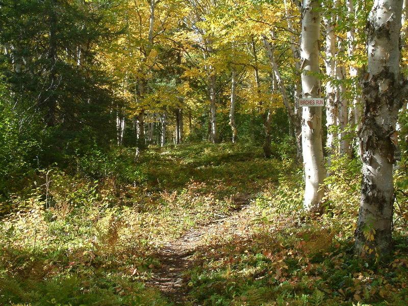 Beginning of Birches Run just off Games Trail