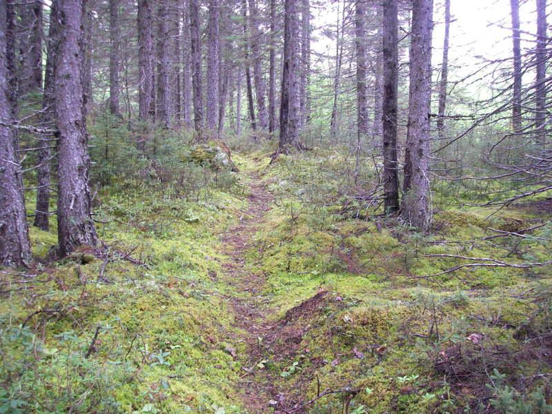 Snowshoe trail C1
