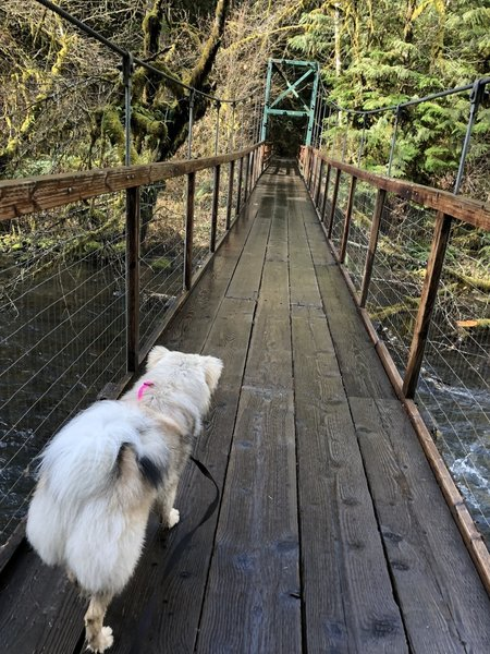 Heading across the suspension bridge - be sure your pups are on leash!